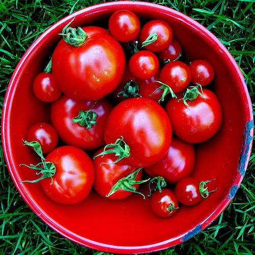 Tomatoes_jacki-dee