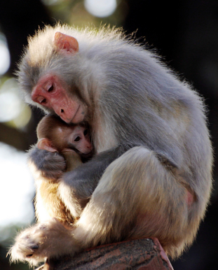 love animals monkey in - photo #10