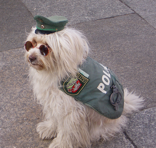 safety pup